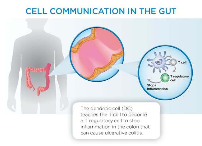 Cell communication in the gut