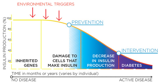 type 1 diabetes insulin production