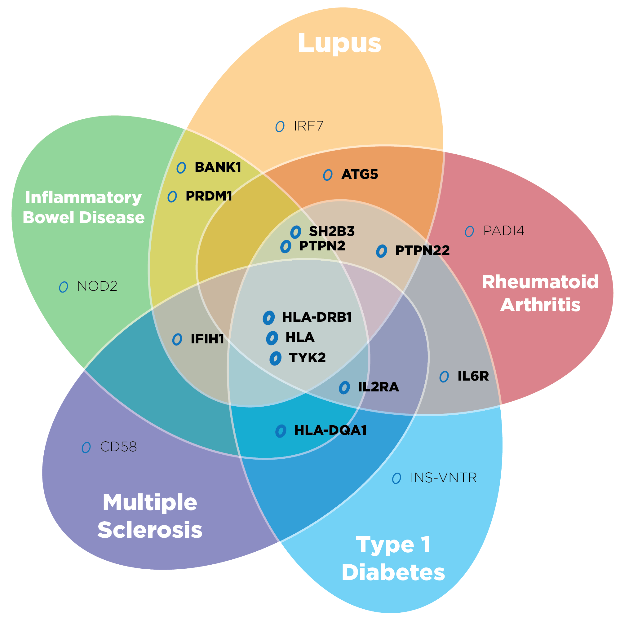 Genetic Connections - Key Genes that appear in multiple autoimmune diseases.