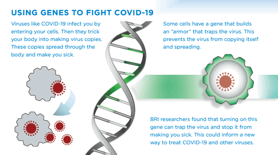 Using-Genes-to-Fight-COVID-19